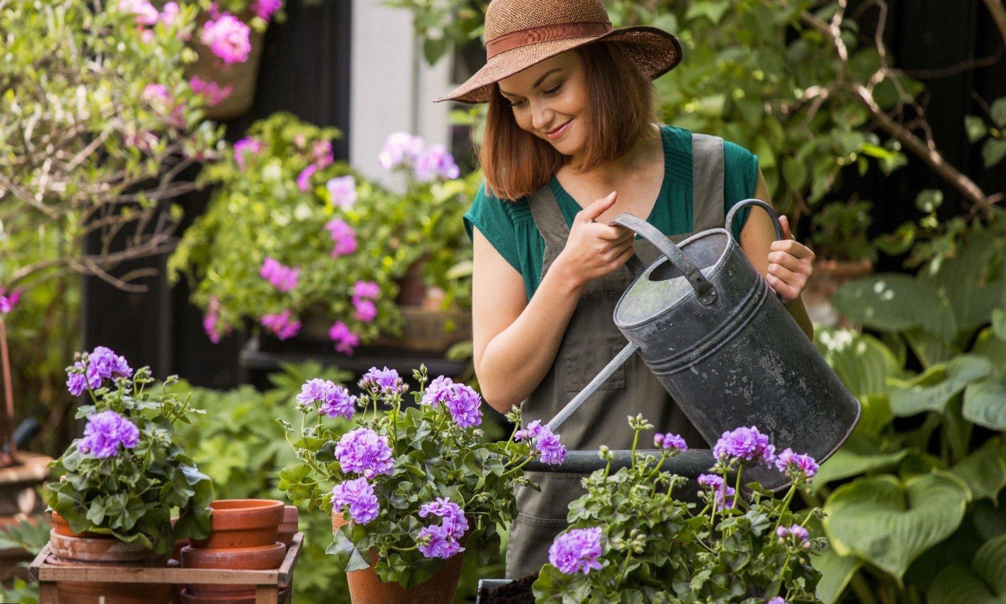 Несколько правил ухода за растениями в летний зной